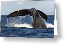 Humpback Tail Greeting Card by Dave Fleetham