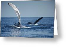 Humpback Whale Pectoral Slap Maui Greeting Card
