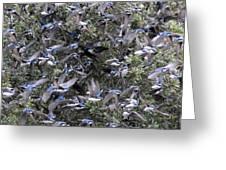 Hundreds - Tree Swallows Greeting Card
