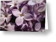 Hungarian Lilac Nr 9 Greeting Card
