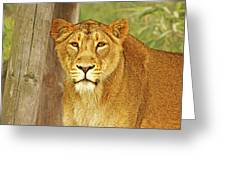 Hungry Eyes Greeting Card