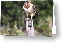 Hungry Hawk Greeting Card