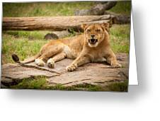 Hungry Lion Greeting Card