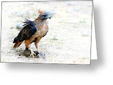 Hungry Red Teiled Hawk Greeting Card