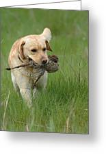 Hunting Dog Greeting Card