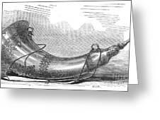 Hunting Horn, 1869 Greeting Card