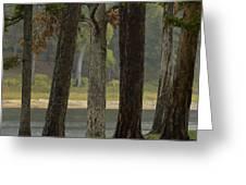 Hurricane Creek Greeting Card