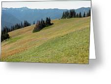 Hurricane Ridge 1 Greeting Card