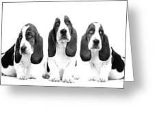 Hush Puppies Greeting Card