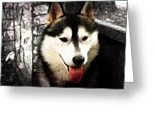 Husky Greeting Card by Tilly Williams