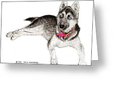 Husky With Blue Eyes And Red Collar Greeting Card