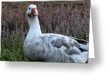 Hybrid Goose Greeting Card