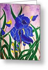 Hybrid Iris Greeting Card