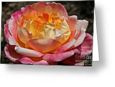 Hybrid Tea Rose Greeting Card