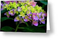 Hydrangea Beauty Greeting Card