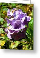 Hydrangea Bloom Greeting Card by Beverly Hammond