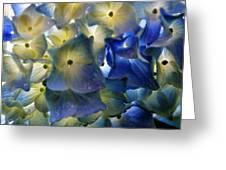 Hydrangea Close-up Greeting Card