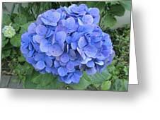 Hydrangea Flowerhead Greeting Card