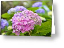 Hydrangea On S Battery Greeting Card by Lori Kesten