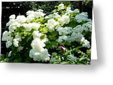 Hydrangeas And A Rose Greeting Card