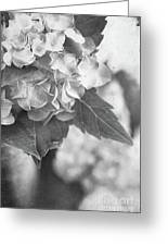 Hydrangeas In Black And White Greeting Card