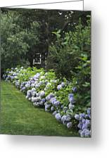 Hydrangeas In Bloom Along A Landscaped Greeting Card