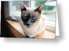 I Am Not Amused Greeting Card