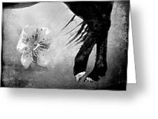 I Dream In Black And White Greeting Card
