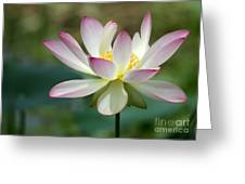I Love Lotus Greeting Card