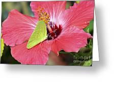 I Love My Hibiscus Greeting Card