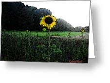 I Love Sun Greeting Card