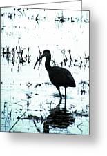 Ibis By Pintail Nature Drive Cameron Prairie Nwr La Greeting Card