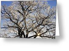 Ice Covered Tree At Sunrise Greeting Card