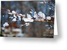 Ice On A Branch Greeting Card