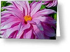 Ice Pink Dahlia Greeting Card