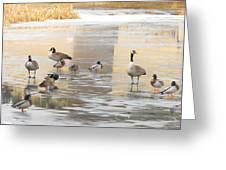 Ice Skating Geese Greeting Card
