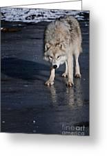 Ice Wolf Greeting Card