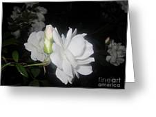 Iceberg Rose In The Night Greeting Card