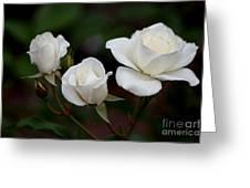 Iceberg Roses Greeting Card