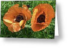 Iceland Poppies Greeting Card