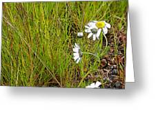 Iceland Spring Greeting Card