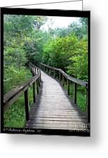 Ichetucknee Forest Pathway Greeting Card