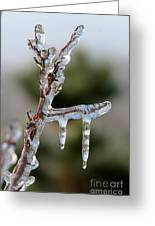 Icy Branch-7529 Greeting Card