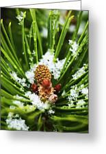 Icy Pine 1 Greeting Card