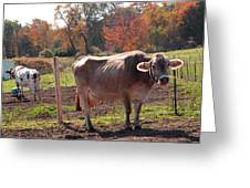Ignoring Cows Greeting Card