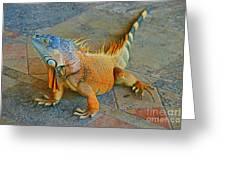 Iguana At The Restaurant  Greeting Card
