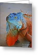 Iguana Close-up Greeting Card
