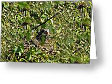 Iguana Hiding In The Bushes Greeting Card