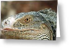 Iguana (iguana Iguana) Greeting Card