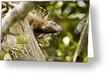 Iguana In Tree Greeting Card